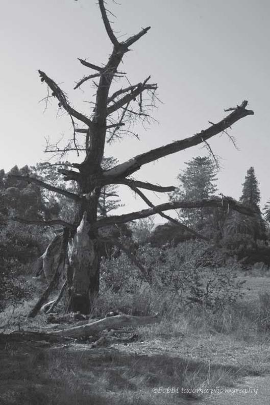 errie_tree-_BW_web